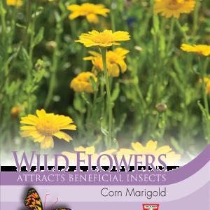 Wild Flower Corn Marigold