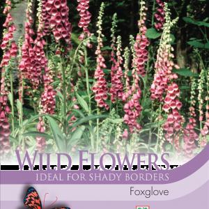 Wild Flower Foxglove