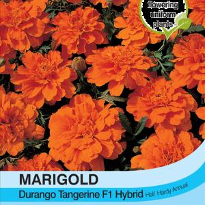Marigold Durango Tangerine F1