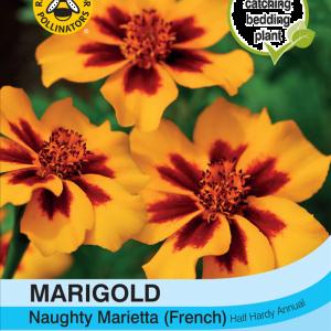 Marigold Naughty Marietta