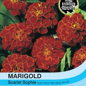 Marigold Scarlet Sophie