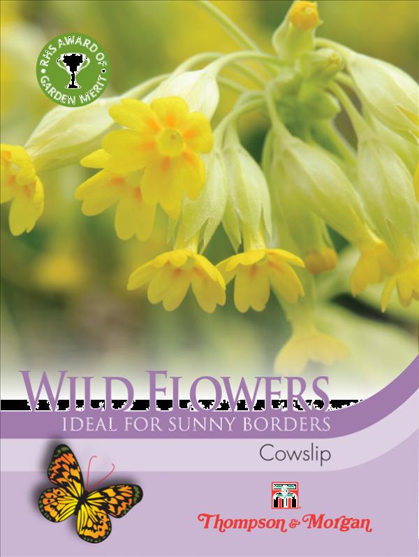 Wild Flower Cowslips
