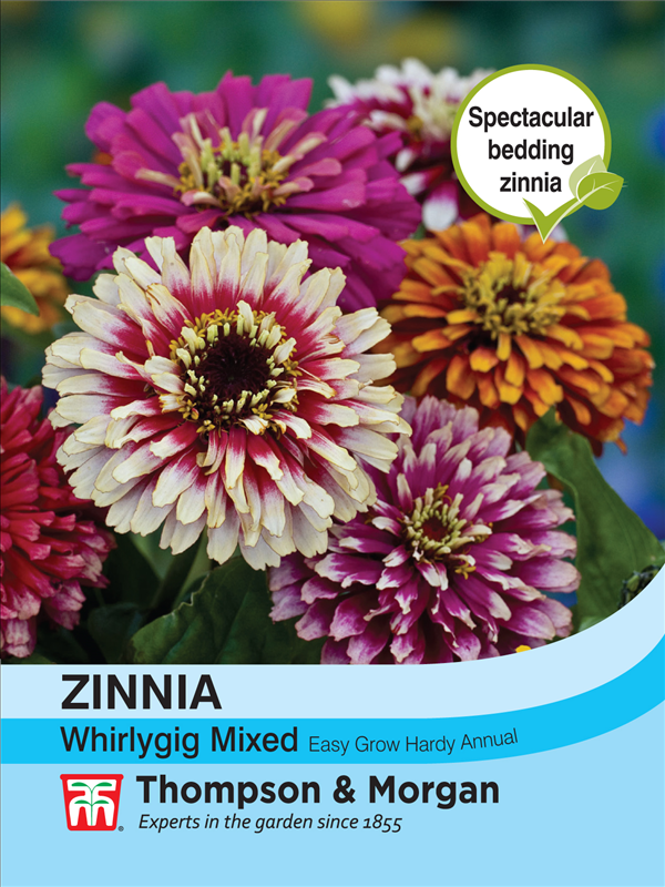 Zinnia Whirlygig Mixed