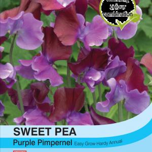 Sweet Pea Purple Pimpernel