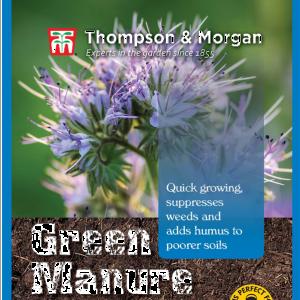 Green Manure Phacelia