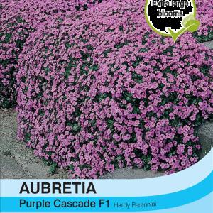 Aubrieta Purple Cascade