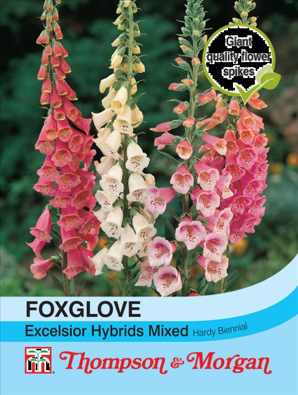 Foxglove Excelsior Hybrids