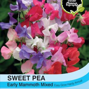 Sweet Pea Early Mammoth Mixed