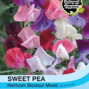 Sweet Pea Heirloom Bicolour Mix