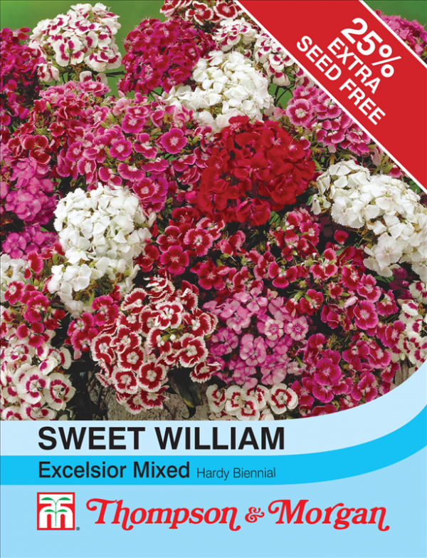 Sweet William Excelsior Mixed