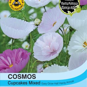 Cosmos Cupcakes - Mixed