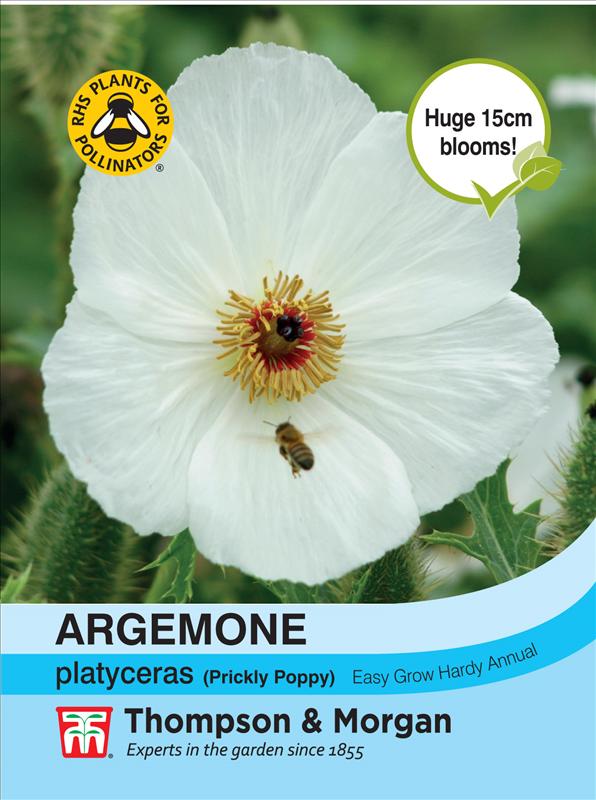 Argemone Platyceras