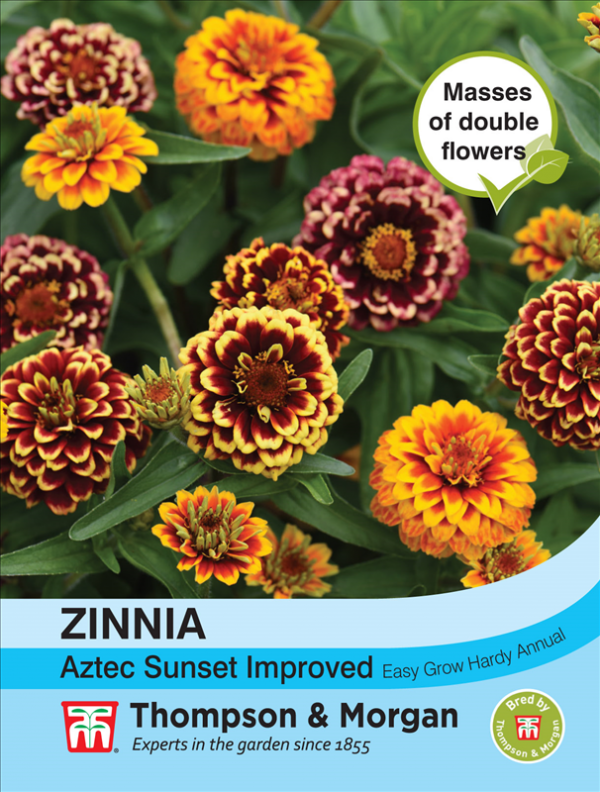 Zinnia Aztec Sunset Improved