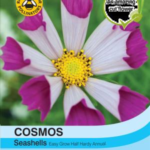 Cosmos Seashells