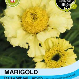 Marigold Daisy Wheel Lemon