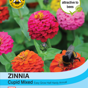 Zinnia Cupid Mixed