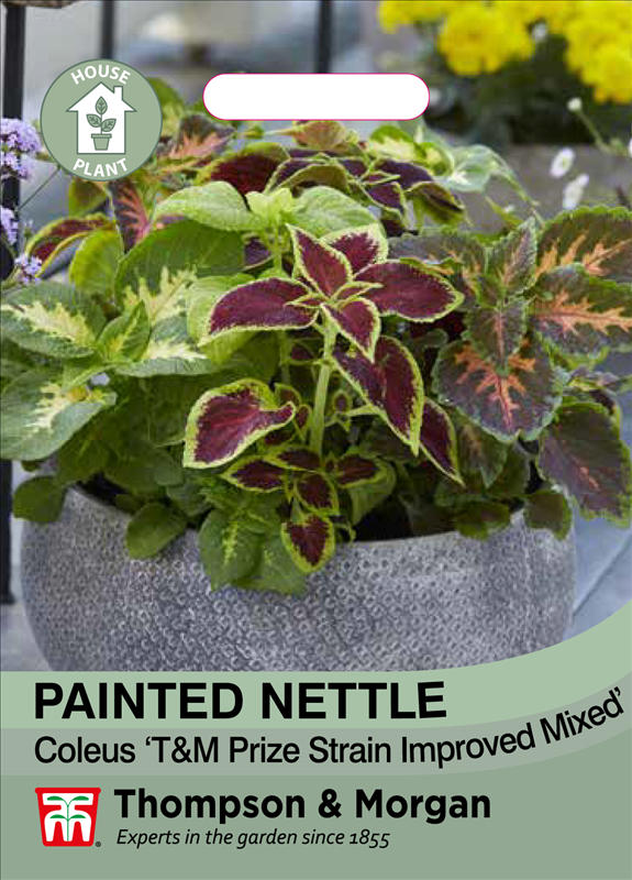 Painted Nettle