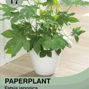 Paperplant Plant