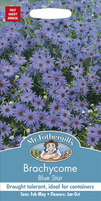 Brachycome Blue Star