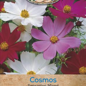 Cosmos Dwarf Sensation Mixed