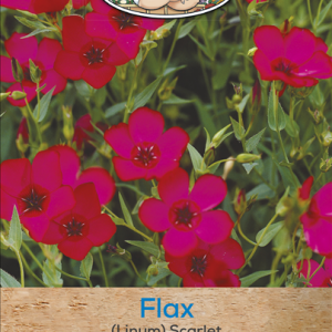 Flax (Linum) Scarlet
