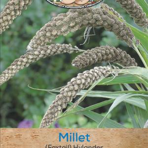 Millet (Foxtail) Hylande