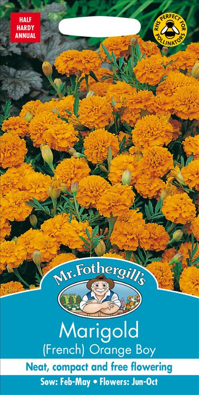Marigold (French) Orange Boy