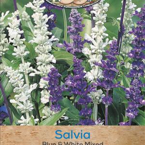 Salvia Blue & White Mixed
