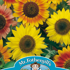 Sunflower Sunburst Mixed