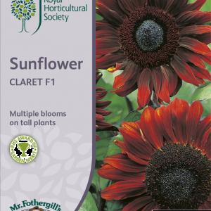 RHS Sunflower Claret F1