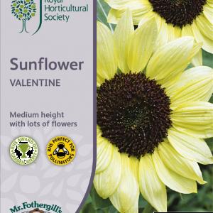 RHS Sunflower Valentine