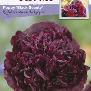Poppy Black Beauty