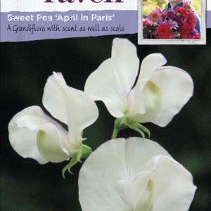 Sweet Pea April In Paris