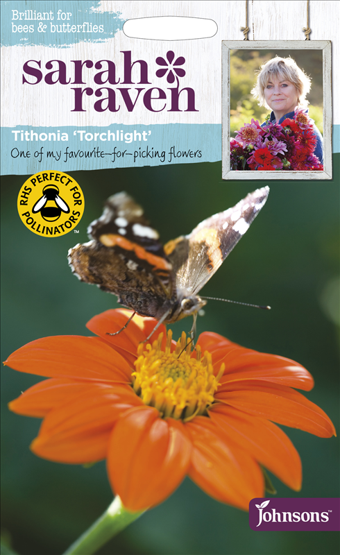 Tithonia Torchlight