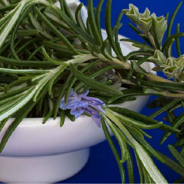 Rosemary Officinalis 1L