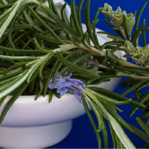 Rosemary Prostrate 1L
