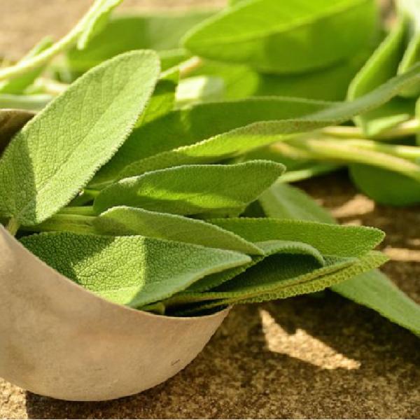Sage Green 1L