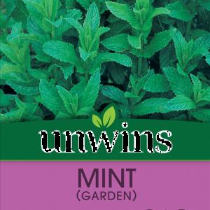 Herb Mint (Garden)