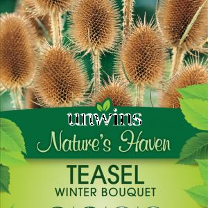 Teasel Winter Bouquet