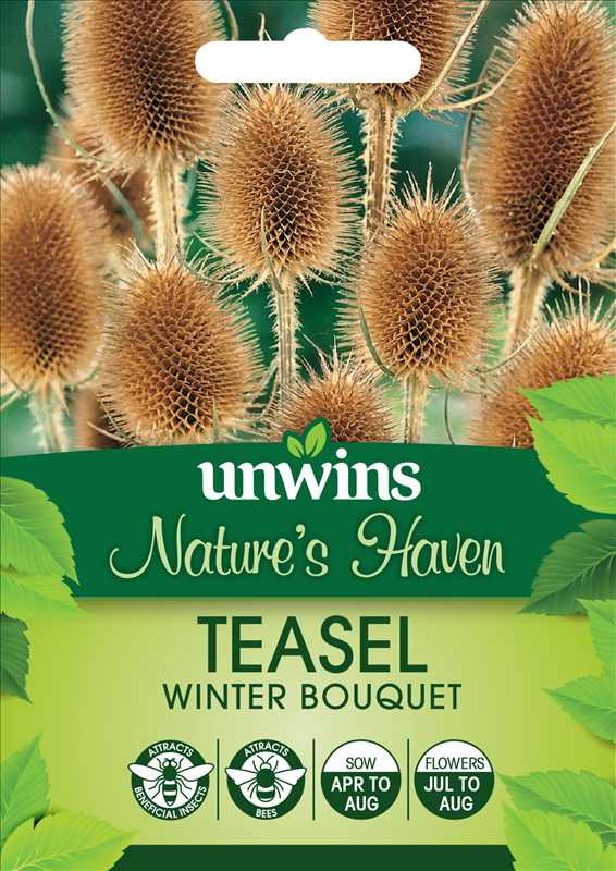 Teasel Winter Bouquet