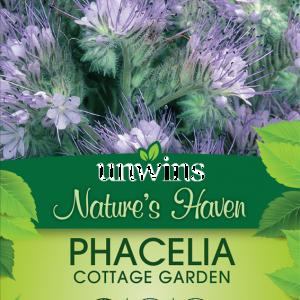 Phacelia Cottage Garden
