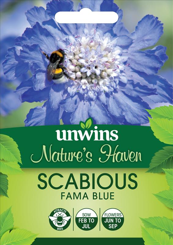Scabious Fama Blue