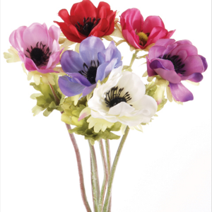 Alfresco Anemone Mix Colours