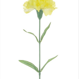 Carnation Lemon