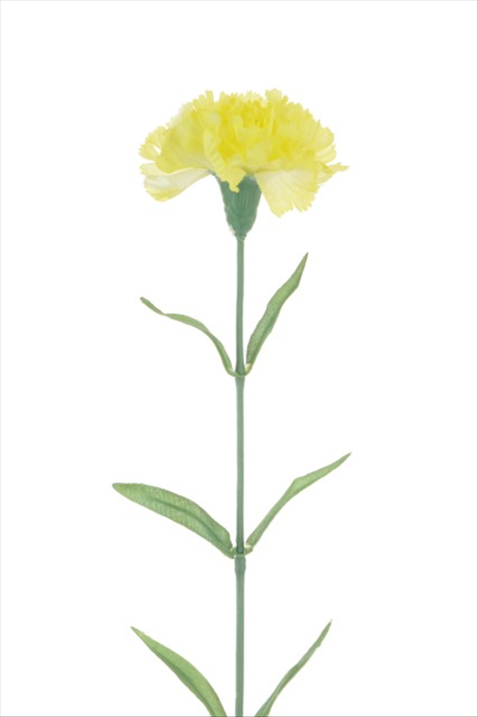 Carnation Lemon