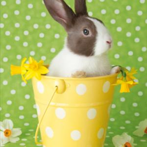 Bunny in Yellow Bucket MW
