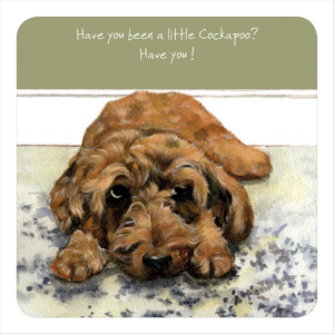 Coaster- Cockapoo