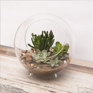 Large Sphere Terrarium Planter