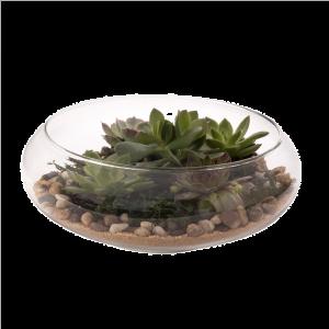 Terrarium Tabletop Planter