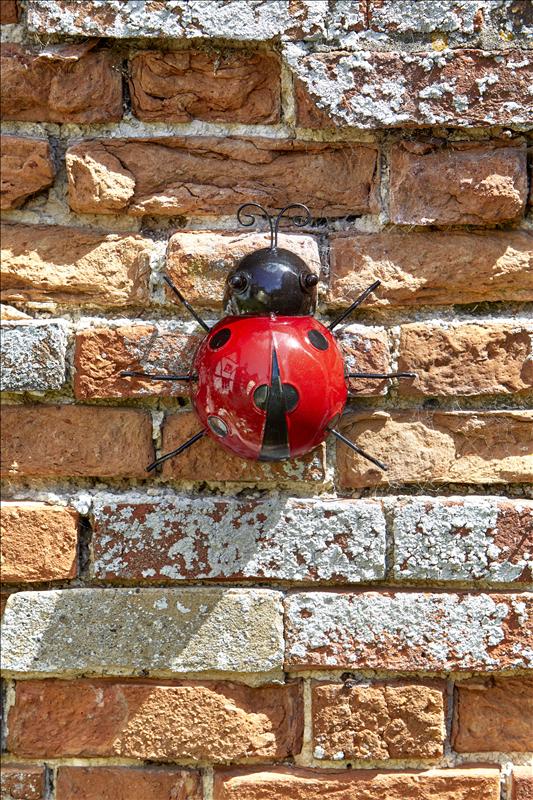 Ladybird Hanger On